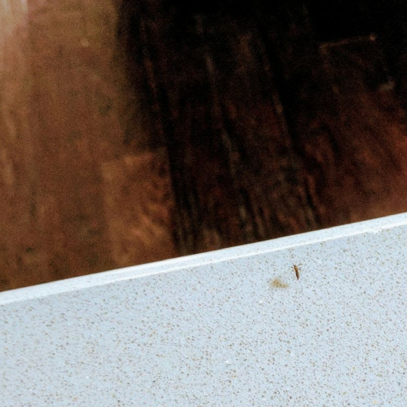 asian tiger mosquito on counter lennar construction problems mark metheny