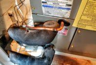 6111 yeats manor drive tampa florida mark metheny lennar inspection reports