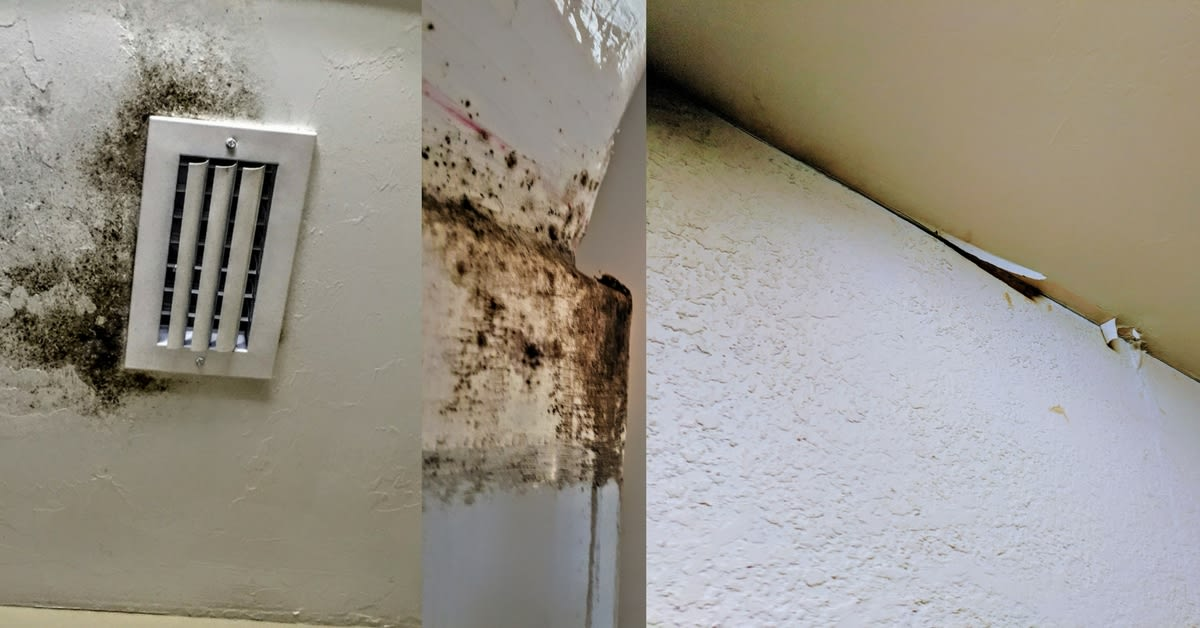 Before They Basically Went Silent Was That All Areas Affected By Water Intrusion And Potential Mold Growth Would Be Inspected Properly Remediated